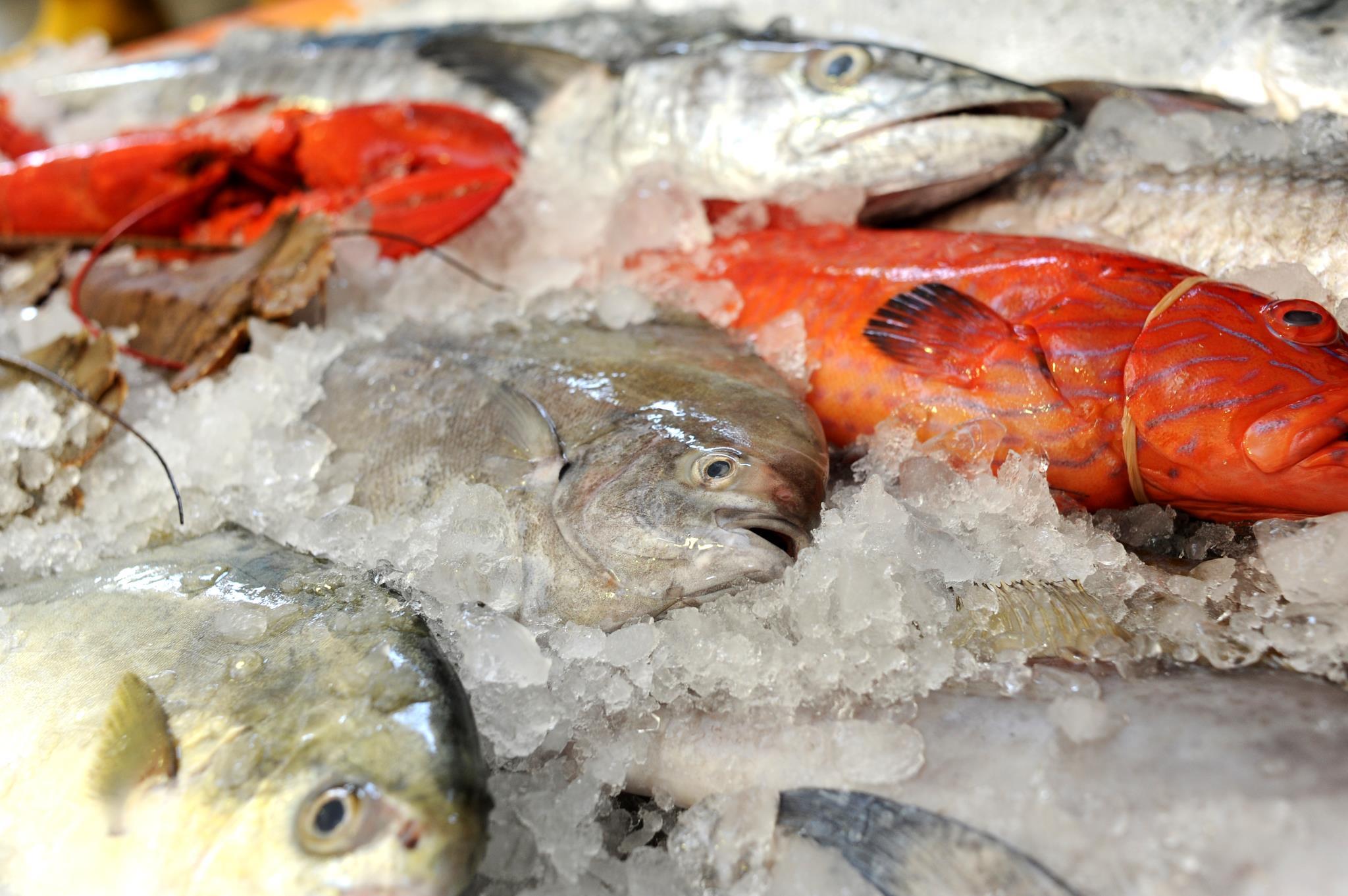 wholesale-food-factories-song-fish-dealer