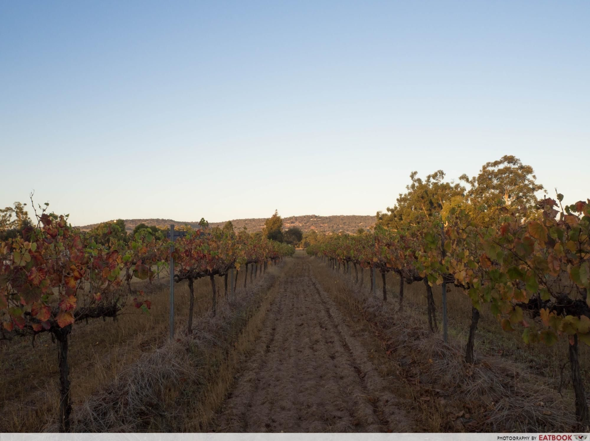 swan valley - vineyard 1