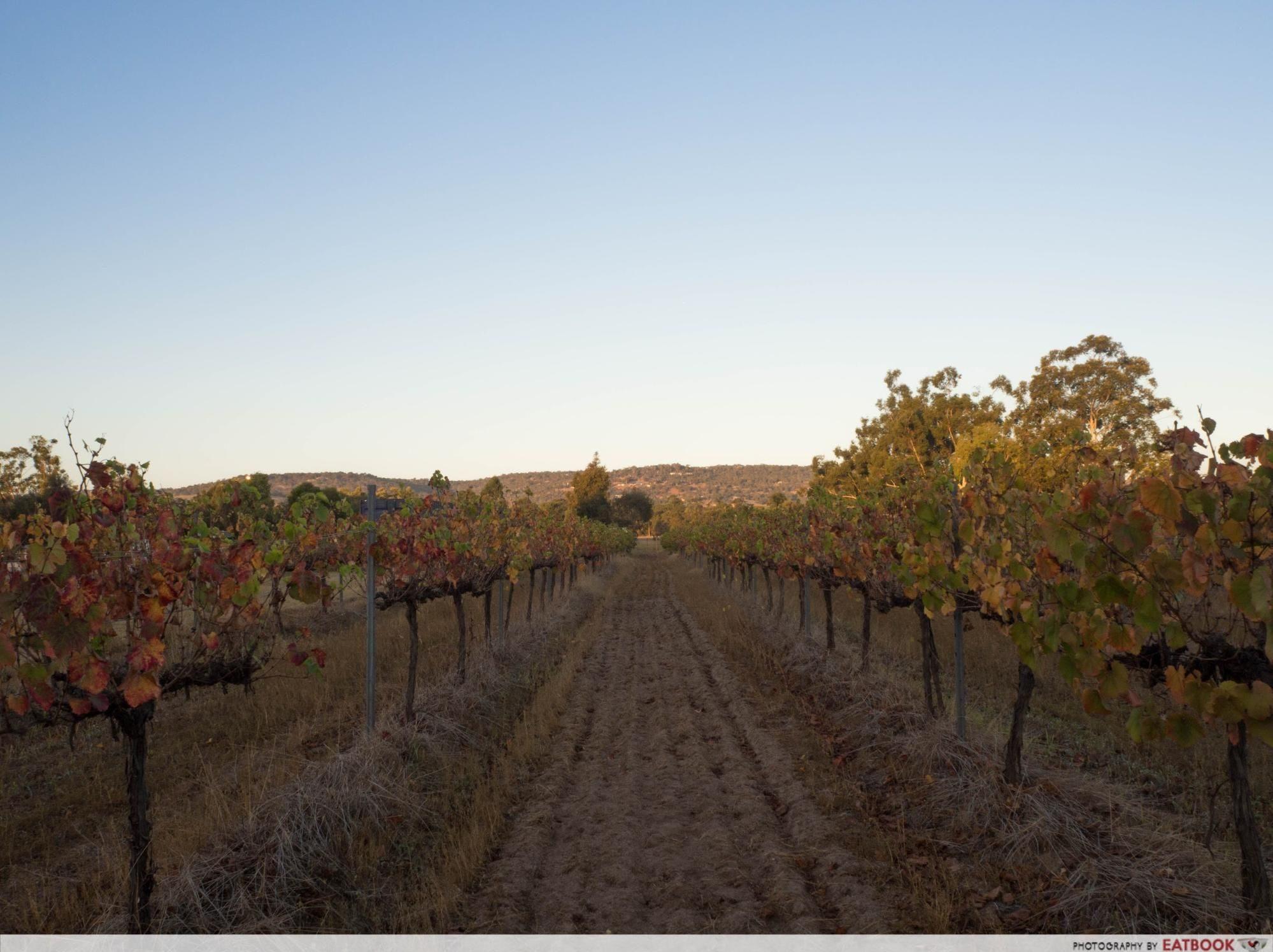 swan valley - vineyard 1