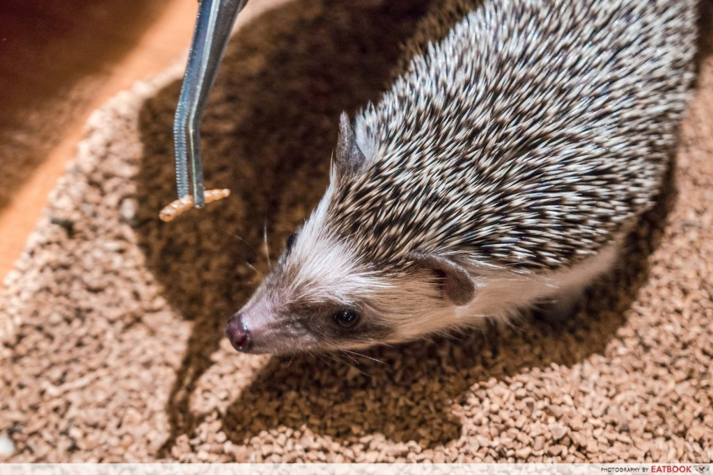 HEDGEHOG CAFE (JAPAN)-food