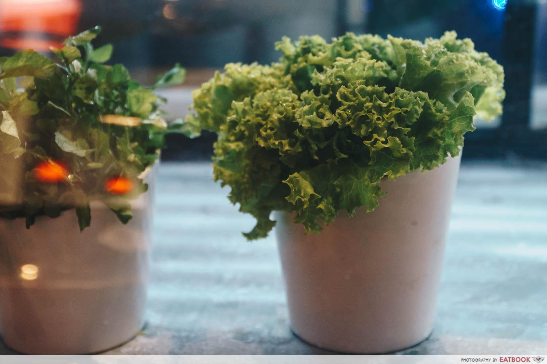 Xiao Mu Deng Traditional Hotpot - Lettuce