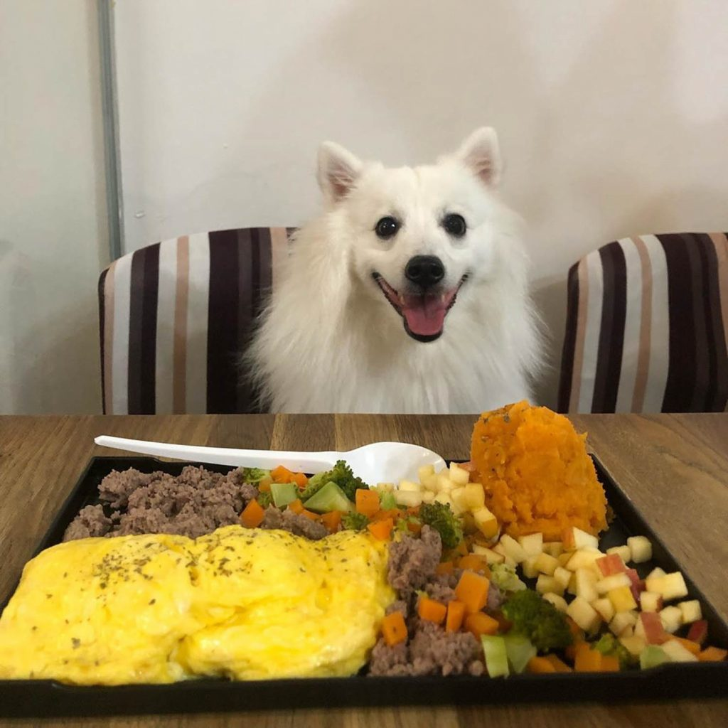 Pet-Friendly Cafe - Sun Ray Cafe dog