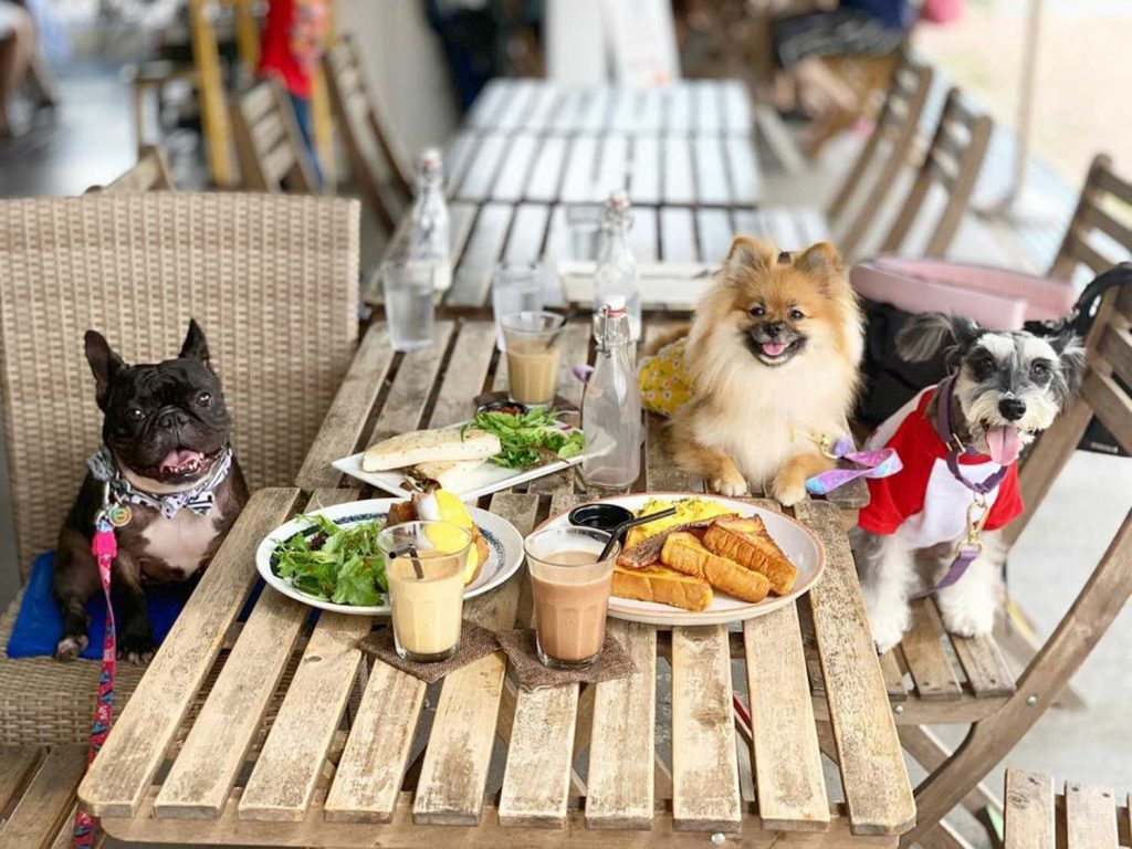 Pet-Friendly Cafe - Whisk and Paddle dogs