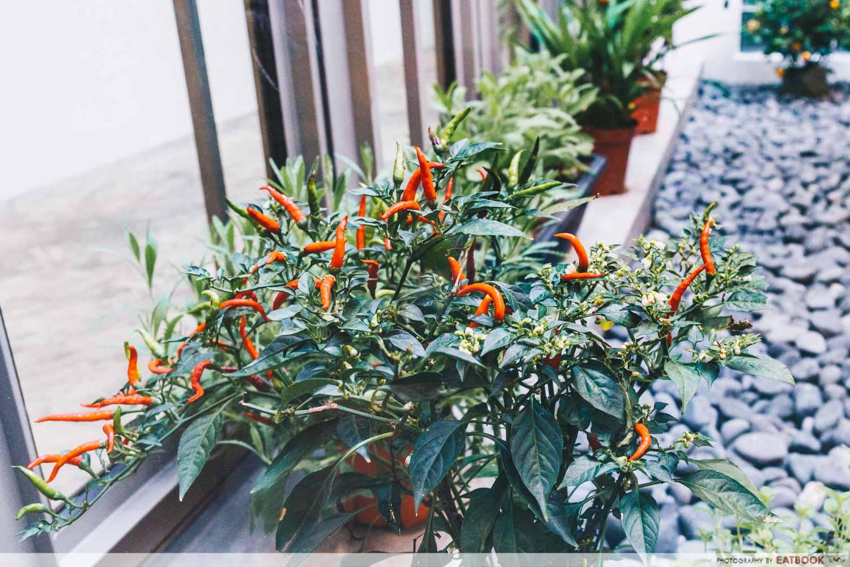 Monarchs & Milkweed Gelato - Mini Garden